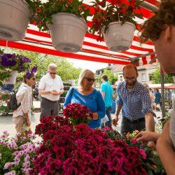 ZVO – Bloemenmarkt 28 & 29 mei 2016 – Foto door David Barbe